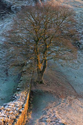 セイヨウカジカエデ「England, Northumberland,  Hadrian's Wall.」:スマホ壁紙(17)