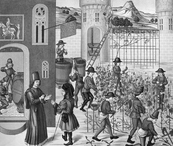 Circa 14th Century「Viticulture」:写真・画像(10)[壁紙.com]