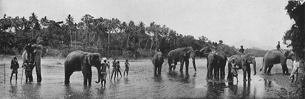 Water's Edge「'Kandy. Sacred Elephants of the Temple Bathing', c1890,」:写真・画像(4)[壁紙.com]