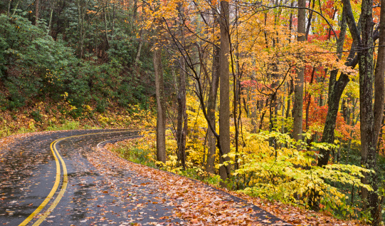Gatlinburg「Smoky Mountains Autumn Roads Series」:スマホ壁紙(18)