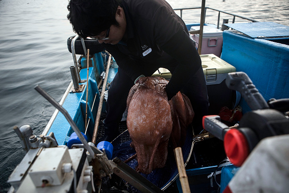 Octopus「South Korean Villagers Observe Easing Tensions From The Border With DPRK」:写真・画像(11)[壁紙.com]