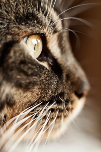 Animal Whisker「Cat's Eye」:スマホ壁紙(13)