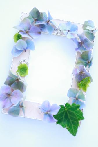 あじさい「Frame attached Hydrangea Flowers and English Ivy」:スマホ壁紙(4)