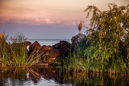 Great Lakes「Blue Heron Landscape on Lake Erie」:スマホ壁紙(14)