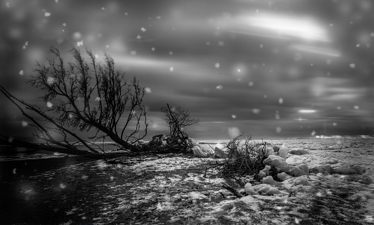 Great Lakes「Point Pelee National Park Winter Scene」:スマホ壁紙(12)