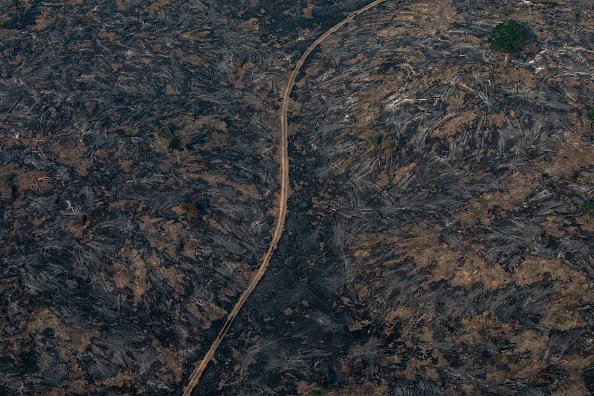 Amazon Rainforest「Record Number Of Fires Torch Brazil's Amazon Forest」:写真・画像(2)[壁紙.com]