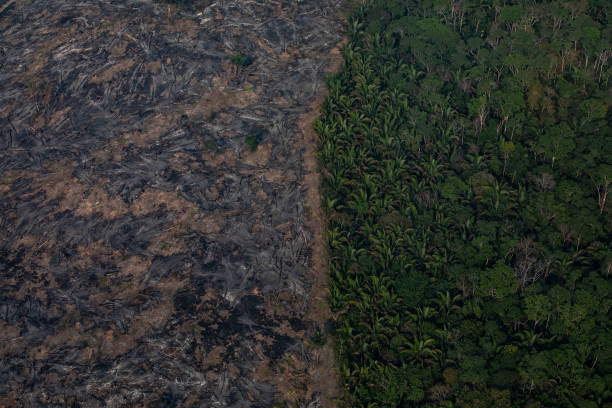 Record Number Of Fires Torch Brazil's Amazon Forest:ニュース(壁紙.com)