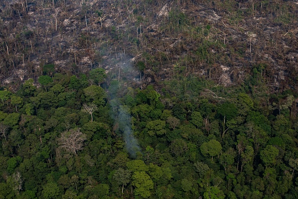 Amazon Rainforest「Record Number Of Fires Torch Brazil's Amazon Forest」:写真・画像(16)[壁紙.com]