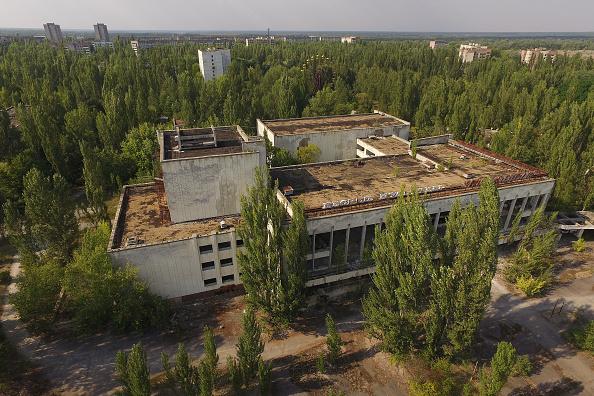 動物「The Stray Dogs Of Chernobyl」:写真・画像(15)[壁紙.com]