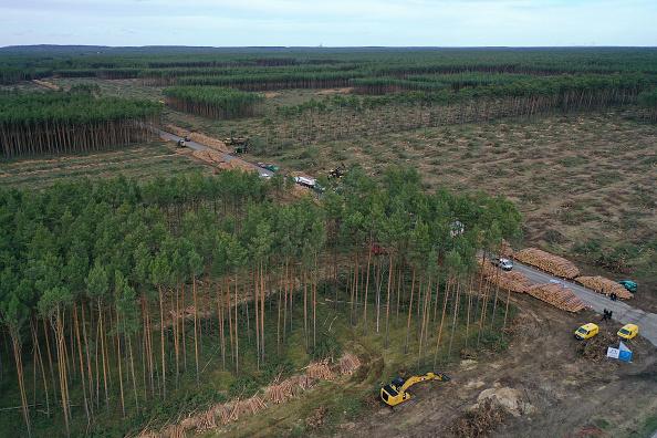 Deforestation「Environmentalists Seek To Block Tesla From Factory Site Deforestation」:写真・画像(4)[壁紙.com]