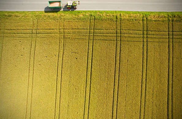 Agricultural Field「Warm weather helps cereal to grow across Germany」:写真・画像(1)[壁紙.com]