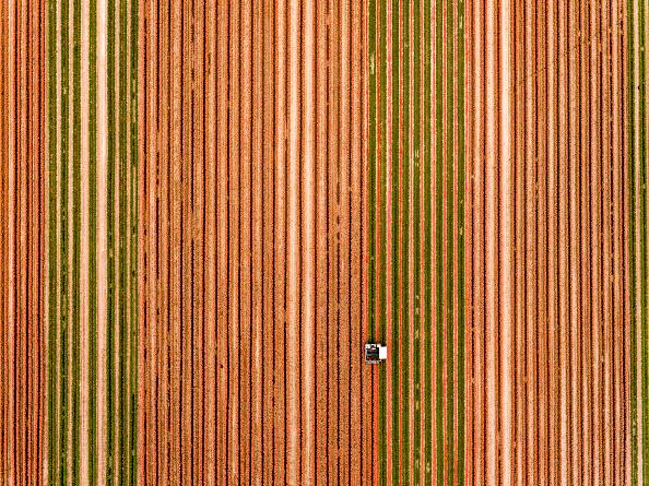 Agricultural Field「Tulip Fields Blossom Near Magdeburg」:写真・画像(6)[壁紙.com]