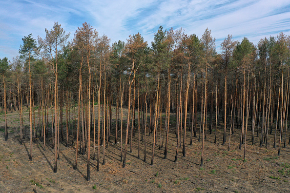 Environmental Damage「Prolonged Dry Weather Hampers Reforestation Following Forest Fire One Year On」:写真・画像(4)[壁紙.com]