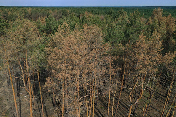 Environmental Damage「Prolonged Dry Weather Hampers Reforestation Following Forest Fire One Year On」:写真・画像(5)[壁紙.com]