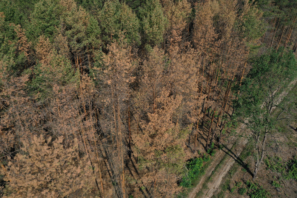 Environmental Damage「Prolonged Dry Weather Hampers Reforestation Following Forest Fire One Year On」:写真・画像(6)[壁紙.com]