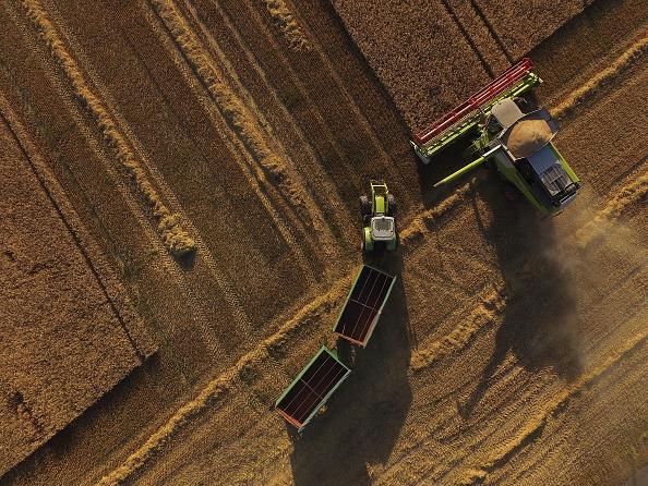 イネ科「Grain Harvests Suffer Under Long, Hot Weather」:写真・画像(9)[壁紙.com]