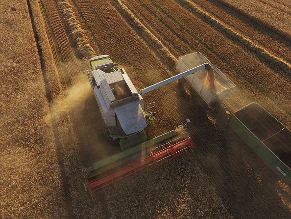 Wheat「Grain Harvests Suffer Under Long, Hot Weather」:写真・画像(4)[壁紙.com]