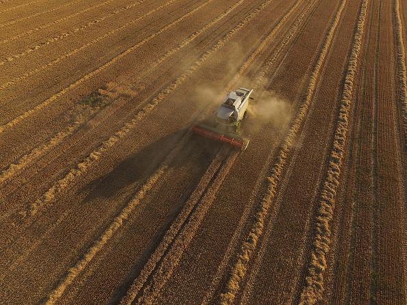 イネ科「Grain Harvests Suffer Under Long, Hot Weather」:写真・画像(10)[壁紙.com]