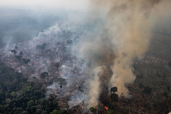 Amazon Rainforest「Record Number Of Fires Torch Brazil's Amazon Forest」:写真・画像(15)[壁紙.com]
