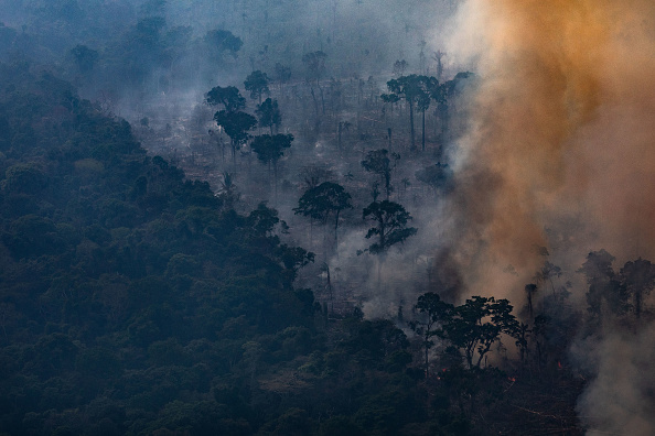 High Angle View「Record Number Of Fires Torch Brazil's Amazon Forest」:写真・画像(12)[壁紙.com]