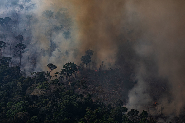 Amazon Rainforest「Record Number Of Fires Torch Brazil's Amazon Forest」:写真・画像(12)[壁紙.com]