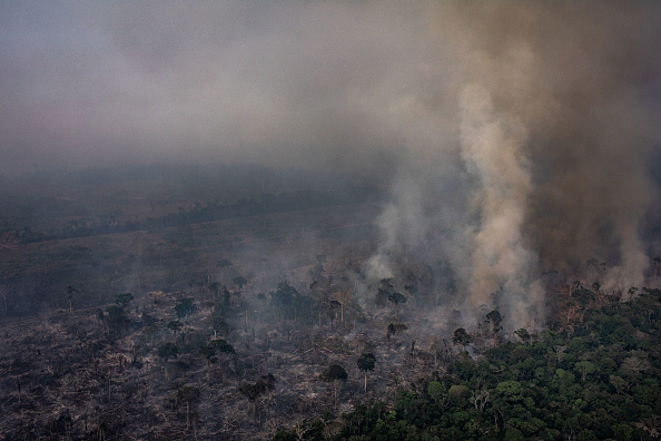 Amazon Rainforest「Record Number Of Fires Torch Brazil's Amazon Forest」:写真・画像(3)[壁紙.com]