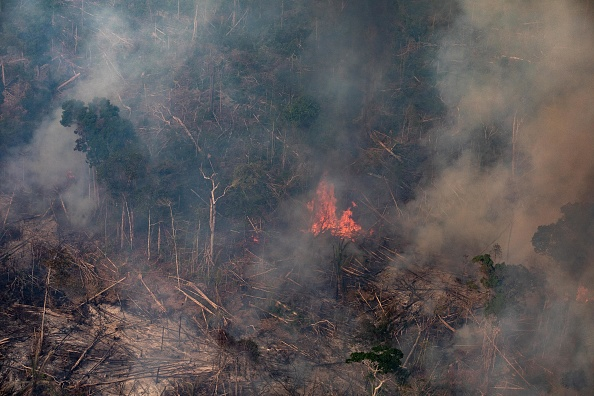 Amazon Rainforest「Record Number Of Fires Torch Brazil's Amazon Forest」:写真・画像(14)[壁紙.com]