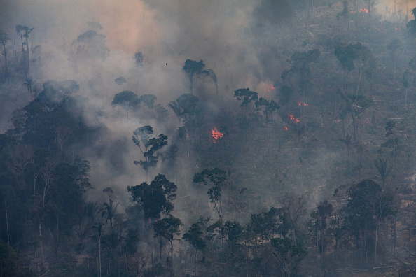 Amazon Rainforest「Record Number Of Fires Torch Brazil's Amazon Forest」:写真・画像(18)[壁紙.com]