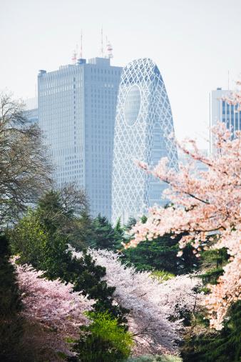 お花見「新宿、東京」:スマホ壁紙(14)