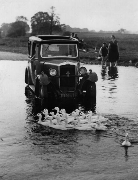 York - Yorkshire「Duck Crossing」:写真・画像(17)[壁紙.com]