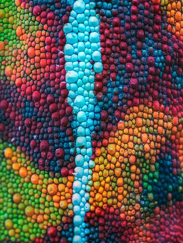 Chameleon「Skin detail Chameleon, Reserve Peyrieras, Madagascar」:スマホ壁紙(13)