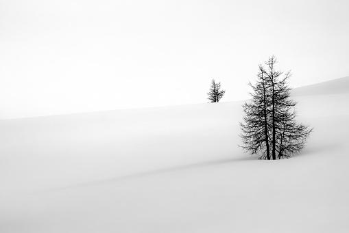 Bad Gastein「Two fir trees in the snow, Bad Gastein, Salzburg, Austria」:スマホ壁紙(17)