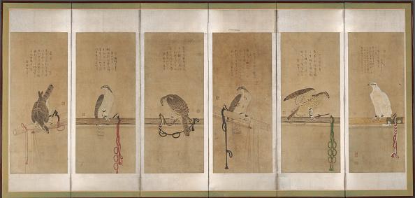 Perching「Tethered Hawks」:写真・画像(11)[壁紙.com]