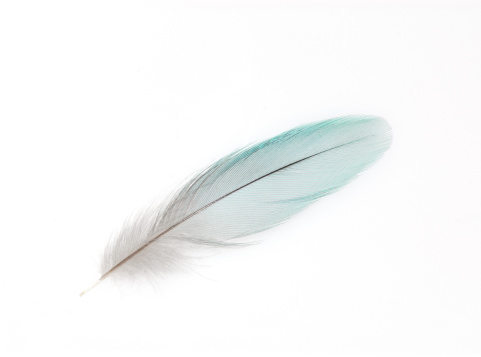 Parrot「A white feather on white background」:スマホ壁紙(15)