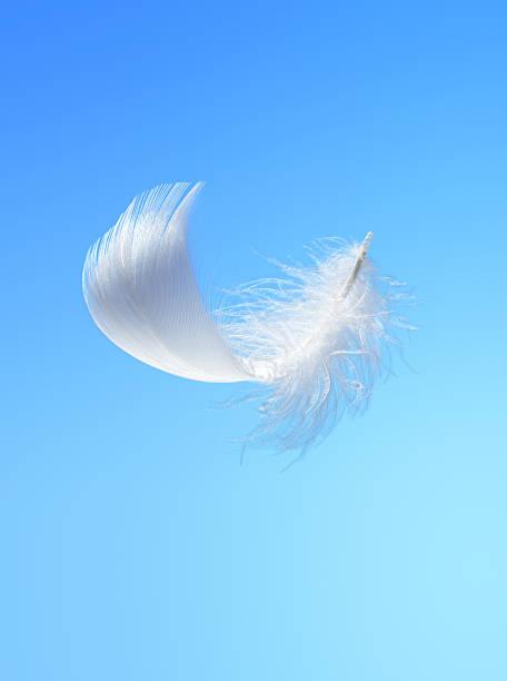 White feather:スマホ壁紙(壁紙.com)