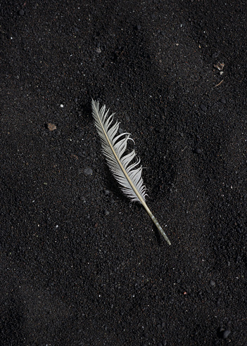 ビーチ「White feather on black volcanic sand」:スマホ壁紙(16)