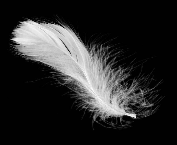 White feather isolated on a black background:スマホ壁紙(壁紙.com)