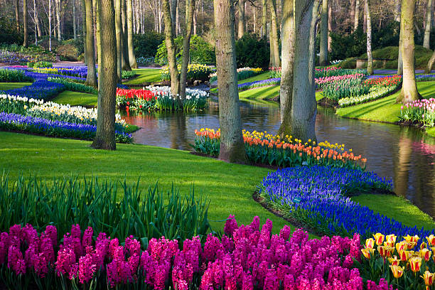 Pond and Spring Flowering Blubs Keukenhof Gardens:スマホ壁紙(壁紙.com)