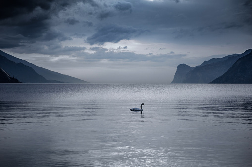 Solitude「Lake Garda in Italy - Swan swimming into the lake」:スマホ壁紙(1)