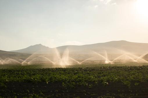 Insecticide「Watering Field」:スマホ壁紙(12)