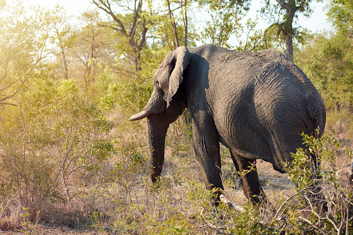 Reserve Athlete「Elephants really are such majestic creatures」:スマホ壁紙(13)