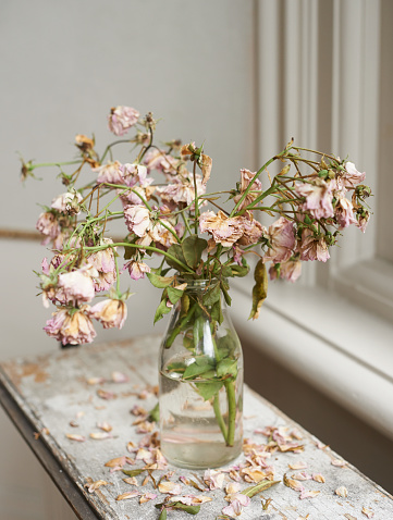 薄ピンク「Vase of dead pink roses」:スマホ壁紙(15)