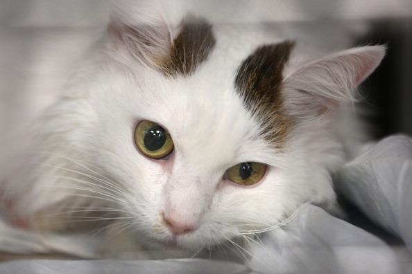 MRI Scanner「New York's Animal Medical Center Provides Advanced Treatments For Pets」:写真・画像(6)[壁紙.com]