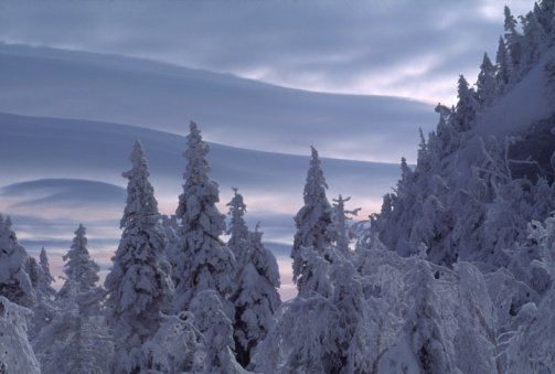 Stowe - Vermont「USA, Vermont, Mount Mansfield, trees covered in snow, winter」:スマホ壁紙(4)