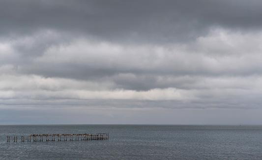 cloud「Bird colony sitting on old jetty on sea, Chile」:スマホ壁紙(1)