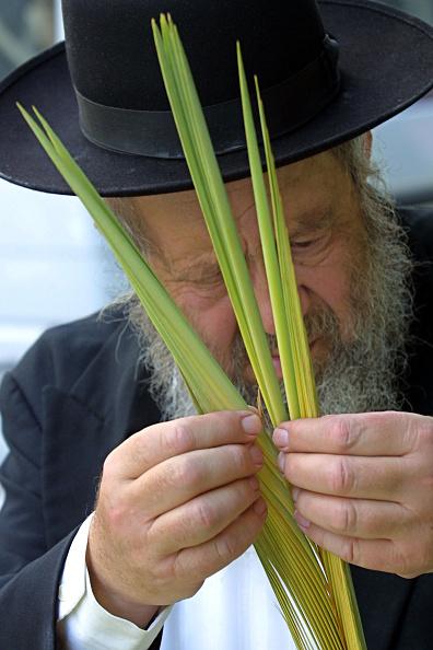Frond「Jerusalem Prepares Sukkot」:写真・画像(4)[壁紙.com]