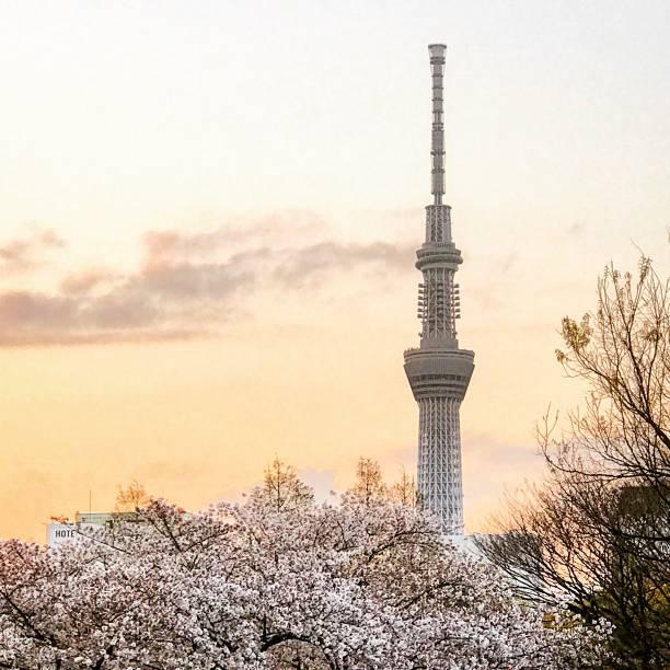 花と東京スカイツリー:スマホ壁紙(壁紙.com)