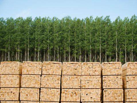 Lumber Industry「USA, Oregon, Boardman, Orderly stacks of timber in timber plantation」:スマホ壁紙(15)