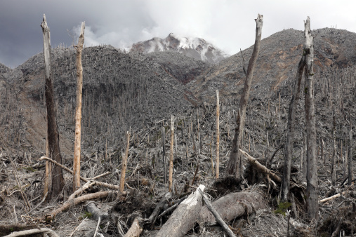 Active Volcano「Chile. Forest destroyed by pyroclastic flows with Chaiten lava dome in background.」:スマホ壁紙(5)