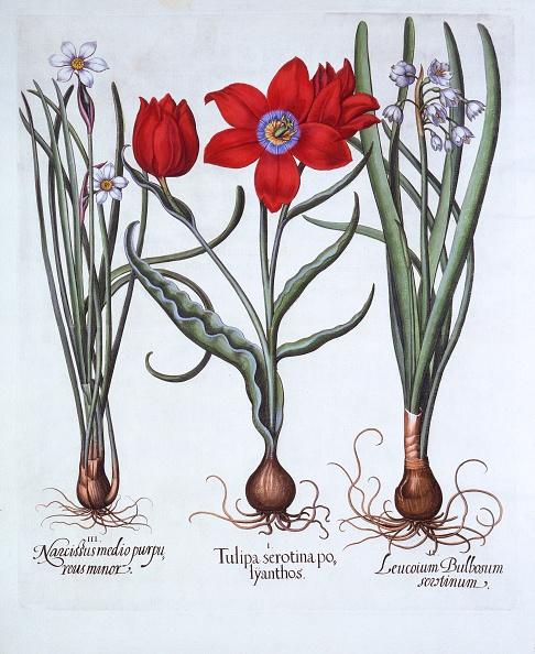 結晶「Tulip」:写真・画像(15)[壁紙.com]